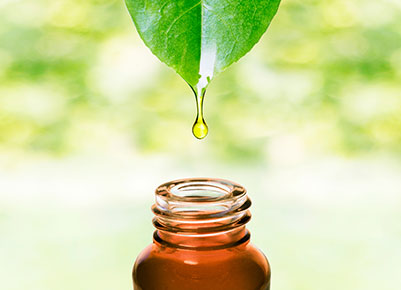 Oil dripping from the tip of a leaf into a bottle